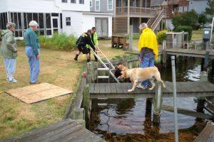 dog-assist