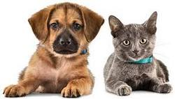 Dog/Cat Vaccination Clinic Thursday at CVFD